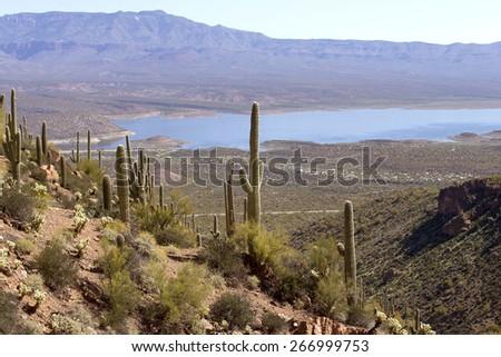 Giant Saguaro cactus at Roosevelt Lake, Arizona, USA - stock photo