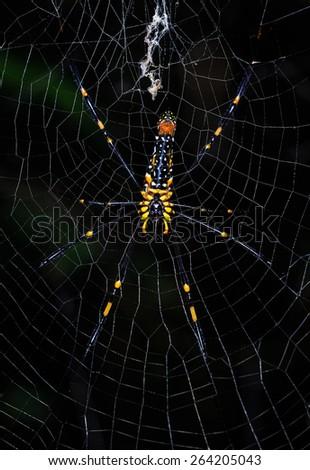 Giant spider on the web (Nephila maculata) - stock photo