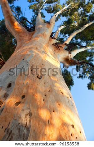 giant tree trunk rising up to blue sky - stock photo