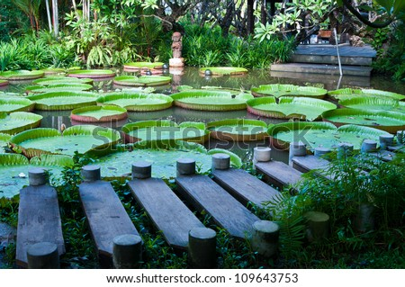 Giant Waterlily and footbridge - stock photo