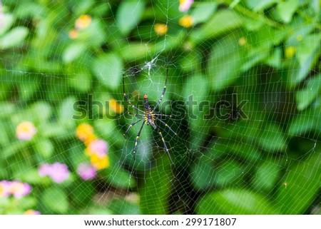 Giant woods spider eating on cobweb - stock photo
