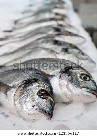 Gilt-head bream(dorade) on ice at the seafood booth - stock photo
