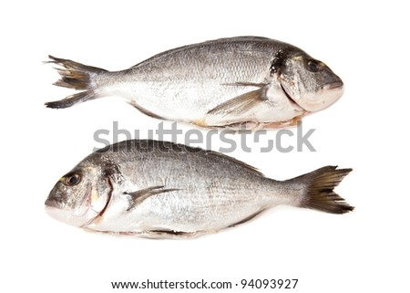 gilt-head (sea) bream (Sparus aurata) fish on a white studio background. - stock photo