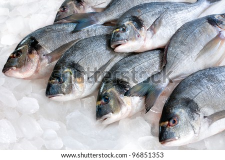 Gilthead (Sparus aurata) on ice at the seafood booth - stock photo