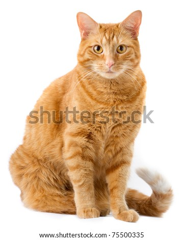 cat licks paw