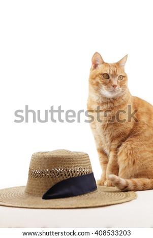 Ginger cat and straw hat  - stock photo