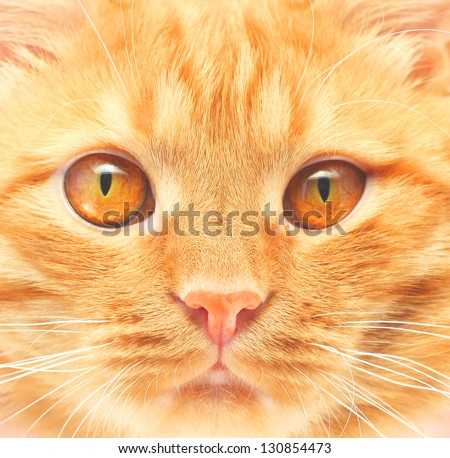 ginger cat background - stock photo