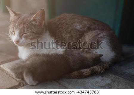 Ginger cat breastfeeding her little kitten, Motherhood, parenting, care - stock photo