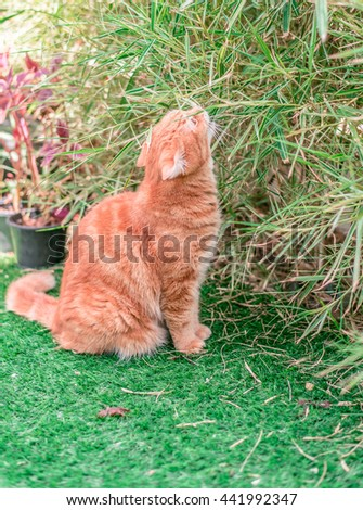 Ginger Cat,  Cat in the Green Grass in Summer. Beautiful Red Cat with Yellow Eyes, Cat smelling flowers - stock photo