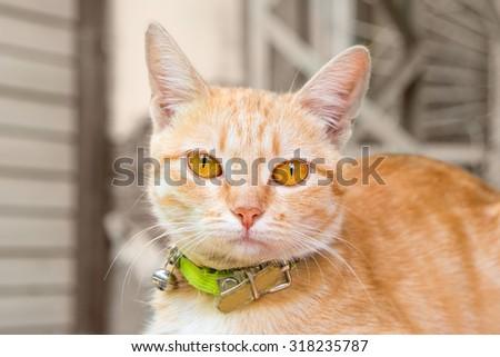 Ginger cat head. Cute orange cat in collar looking at camera. Cute cat outdoors closeup view. Green collar. - stock photo