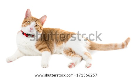 Ginger cat in a red collar listening intently - stock photo