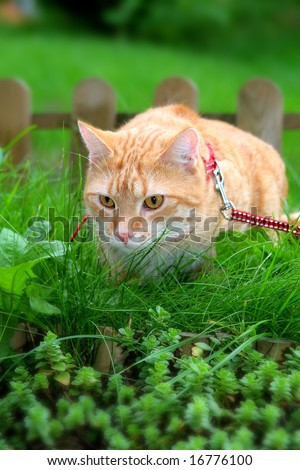 ginger cat in the garden - stock photo
