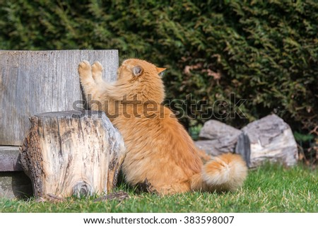 Ginger cat is stretching - stock photo
