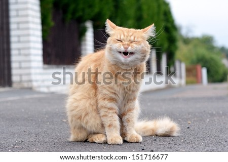 Ginger cat laughs - stock photo