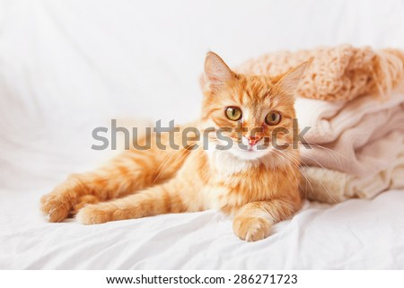 Ginger cat  lies near a pile of beige woolen clothes on a white background. Warm knitted sweaters and scarfs are folded in one heap. imitation of instagram style tone, soft focus. - stock photo