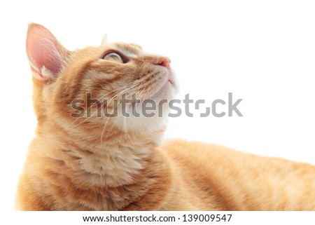Ginger cat looking up, isolated on white background - stock photo