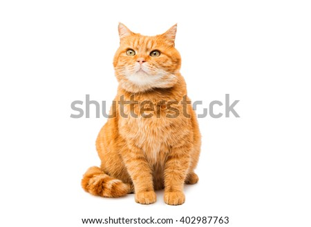 ginger cat on a white background - stock photo