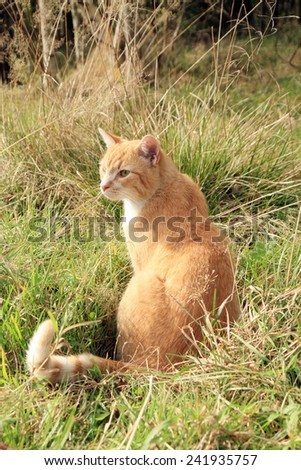 Ginger cat playing on meadow. Sunny summer day. - stock photo