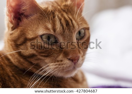 ginger cat portrait - stock photo