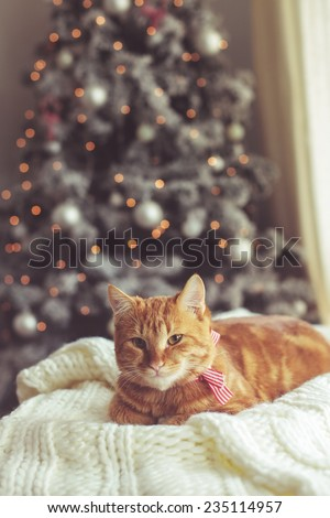 Ginger cat relaxing on soft knitted blanket over decorated holiday Christmas tree - stock photo