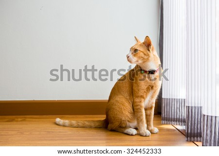 Ginger Cat with collar sitting in the room - stock photo