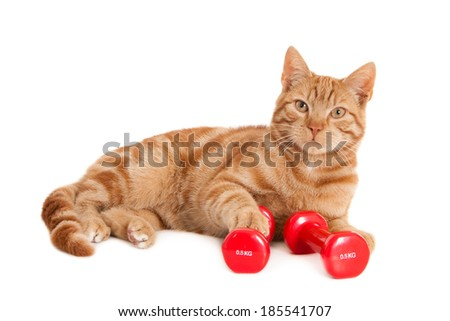 Ginger cat with one paw resting on dumbbell, isolated on white  - stock photo