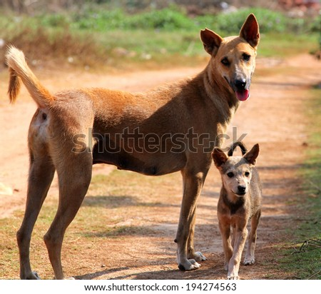 ginger dog with a puppy - stock photo