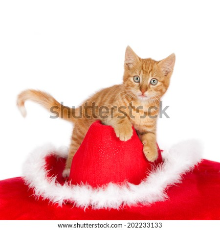 Ginger kitten on top of a Christmas hat against a white background - stock photo