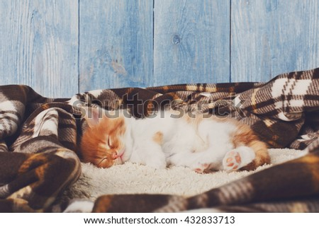 Ginger kitten with white chest. Long haired red orange kitten sleep at plaid blanket. Sweet adorable kitten on a serenity blue wood background. Small cat with toy ball. Funny kitten - stock photo