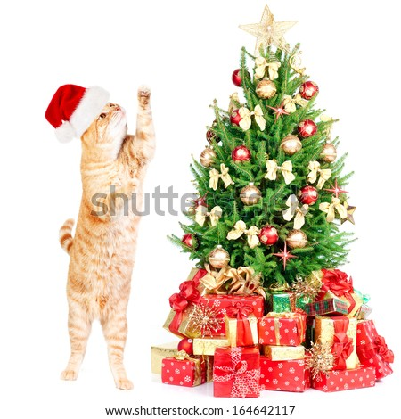 Ginger santa cat and Christmas tree isolated white background. - stock photo