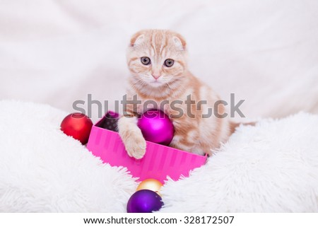 Ginger scottish fold kitty with christmas baubles toys on white cushions  - stock photo