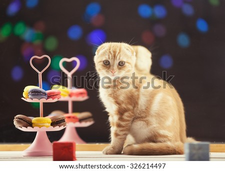 Ginger scottish fold kitty with french macarons near a mirror - stock photo