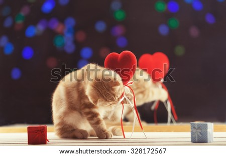 Ginger scottish fold kitty with heart shape toy near a mirror - stock photo