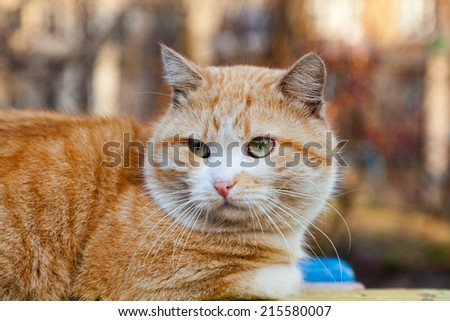ginger street cat with green eyes - stock photo