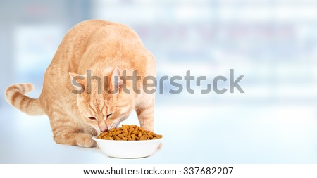 Ginger tabby cat eating food over blue background. - stock photo