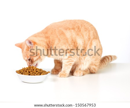 Ginger tabby cat isolated on white background. - stock photo