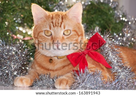 Ginger tabby cat wearing a red bow, with silver tinsel and green wreath background - stock photo