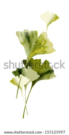 Ginkgos Leaves - stock photo
