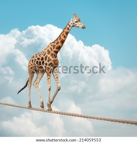 Giraffe balancing on a tightrope concept for risk, conquering adversity and achievement - stock photo