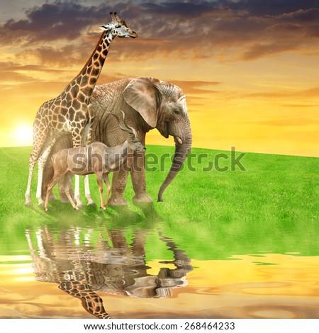 Giraffe, elephant and kudu in the sunset - stock photo