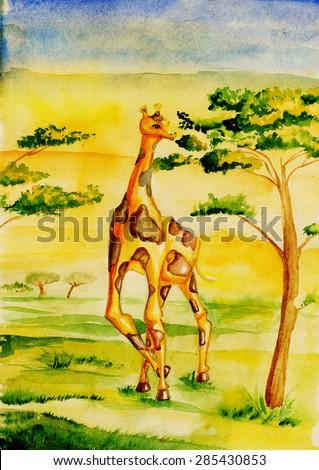 Giraffe in the savannah, eats tree Watercolor drawing - stock photo