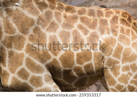 Giraffe patterned background - stock photo