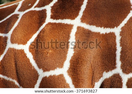 Giraffe Skin print - stock photo