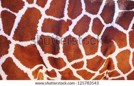 Giraffe skin texture - stock photo