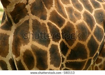 Giraffe Texture - stock photo