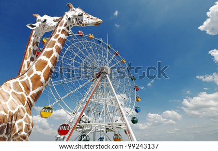 Giraffes walking past a ferris wheel in an amusement carnival against a blue sky with clouds. - stock photo