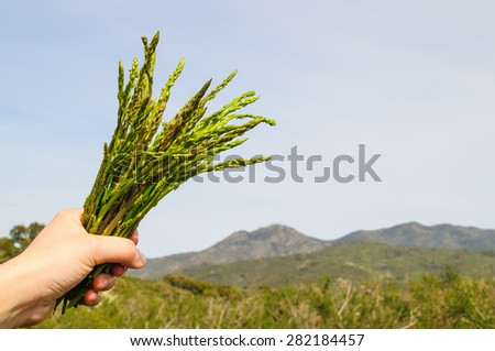 Girl holding a brunch of asparagus - stock photo