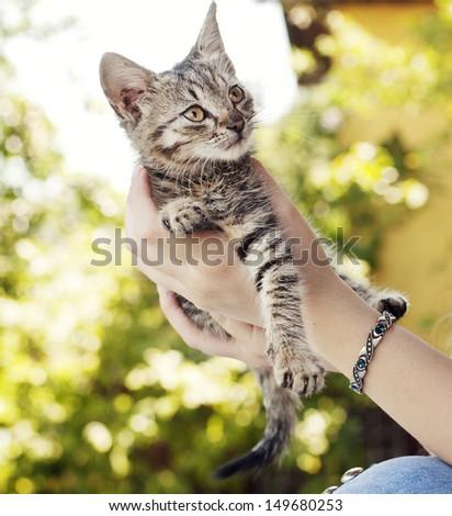 Girl holding adorable tabby kitten - stock photo