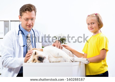 girl holds a dog in a veterinary clinic, veterinarian inspects a dog - stock photo