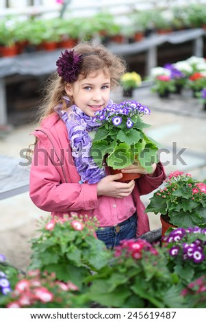 Girl in a pink jacket holding flower pot with cineraria in the greenhouse - stock photo